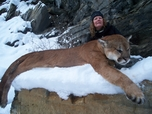 Huge Cougar or Mountain lion, Russell Pond Outfitters