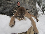 Trophy Mountain lion Russell Pond Outfitters Guided cougar hunt